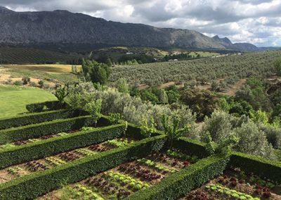 Huertos y olivos