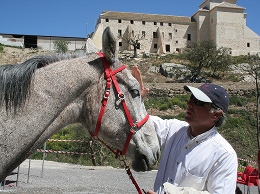caballo para eventos deportivos